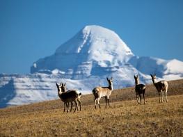 15 Days Mt.Kailash Pilgrimage Trek Tour